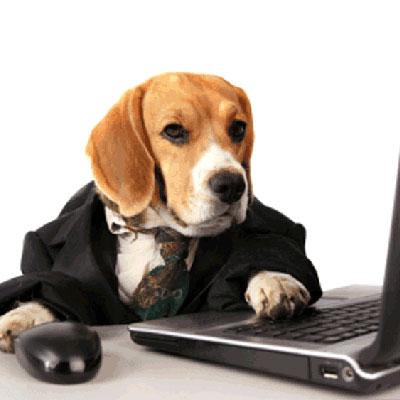 Онлайн-занятия по дрессировке собак