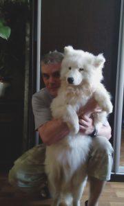 Самоедская собака. Консультация по воспитанию щенка и дрессировка.