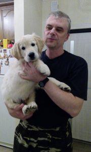 Голден ретривер. Консультация по воспитанию щенка и дрессировка.