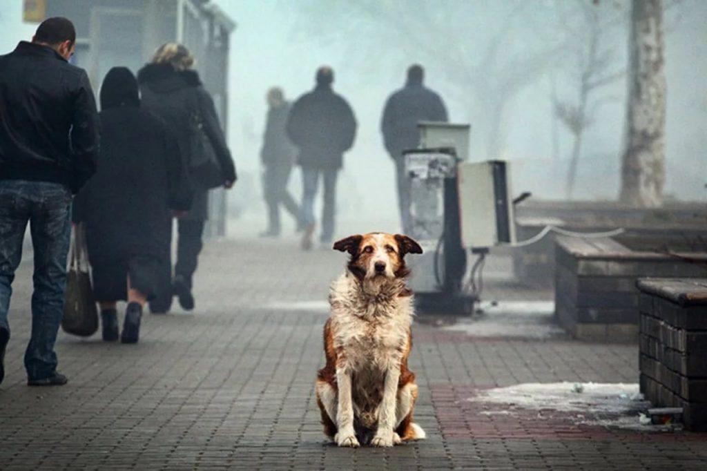 Подобранная собака