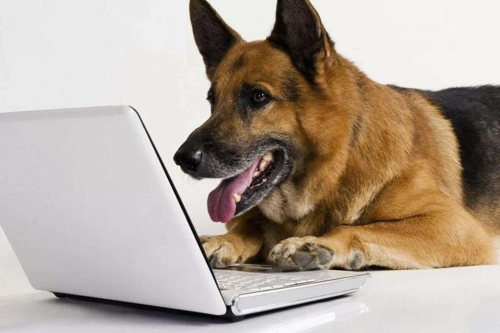 Онлайн-консультации по кинологии и зоопсихологии собак.