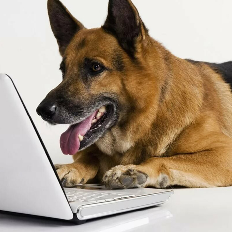 Онлайн-консультации по кинологии и зоопсихологии собак