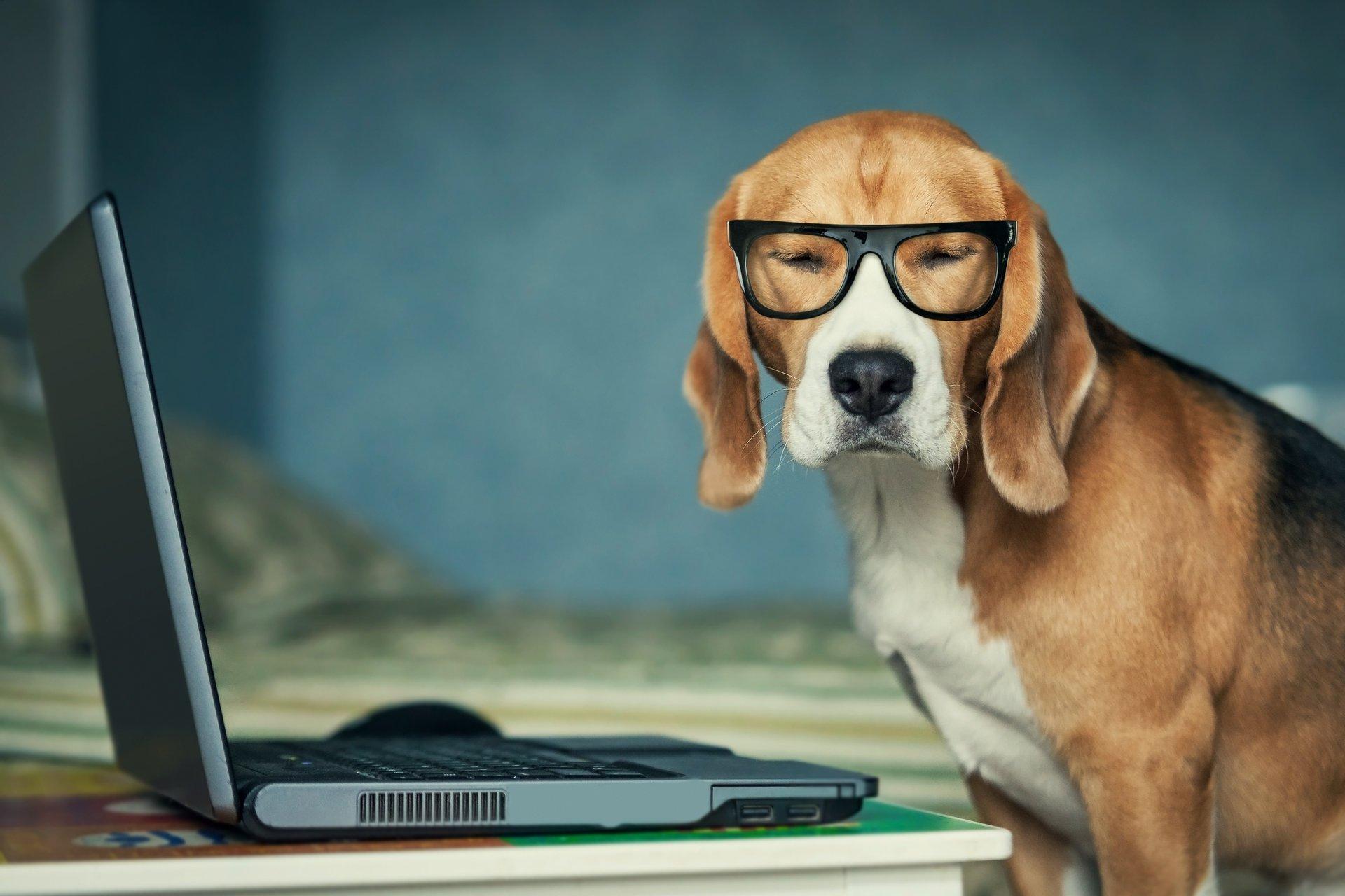 Онлайн-дрессировка собак