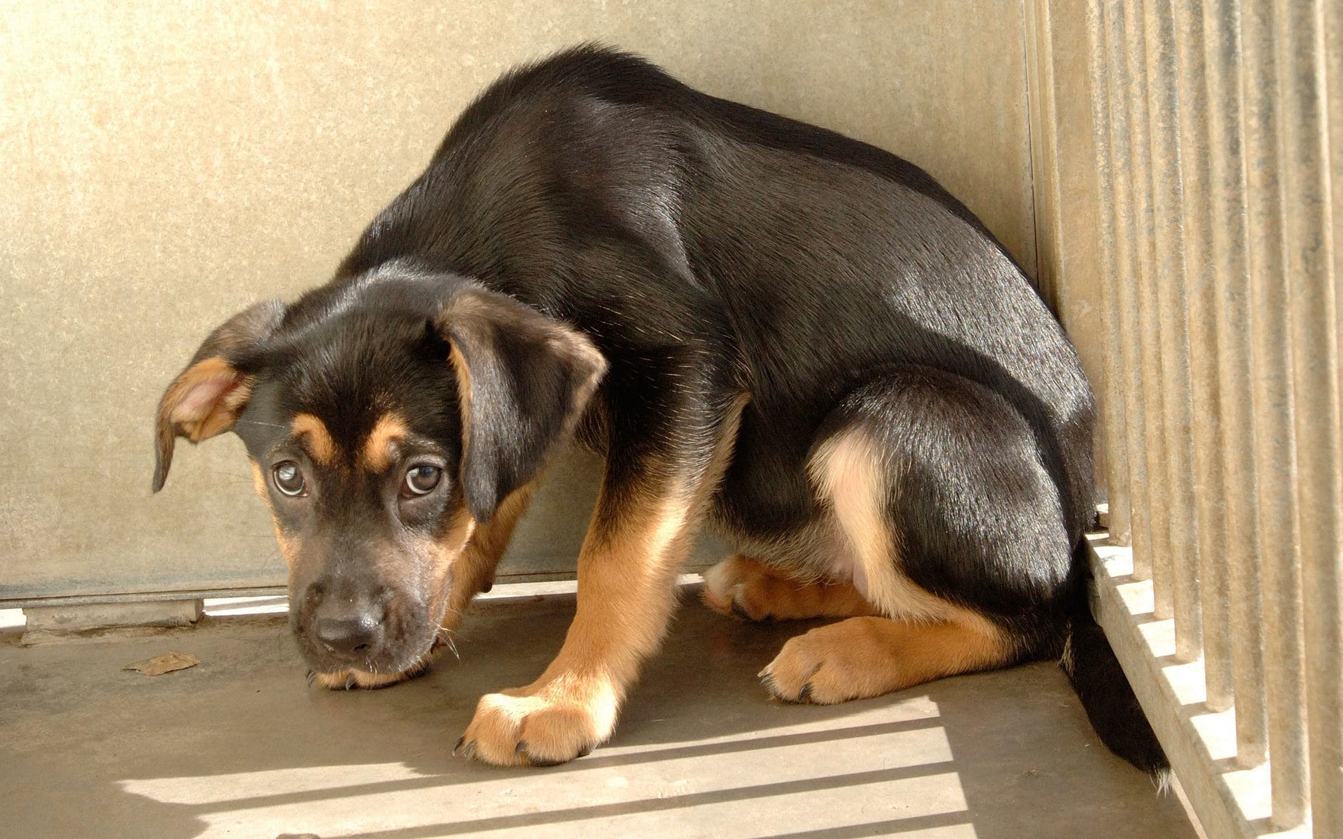 Социализация собаки