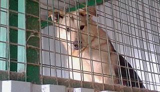 Адаптация собаки из приюта
