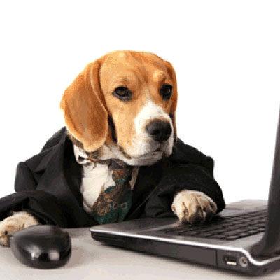 Онлайн-занятия по дрессировке собаки
