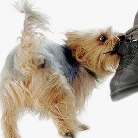 Коррекция поведения собаки